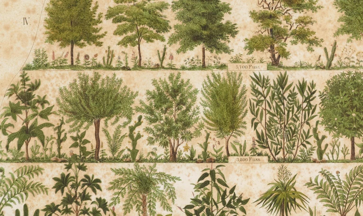 Atlas der Pflanzengeographie über alle theile der Erde 理学研究科所蔵